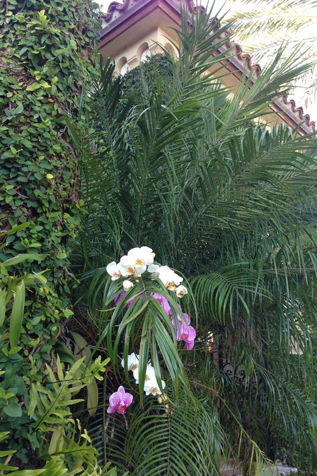 Nini Nguyen Miami Orchid